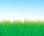 10330732-green-grass-background-with-copy-space